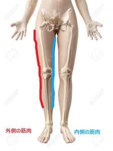 O脚の人の筋肉の付き方